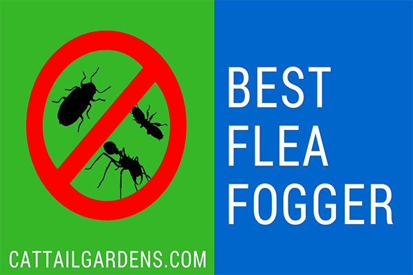 Best Flea Fogger 2018 – What Is The Best Flea Fogger on The Market