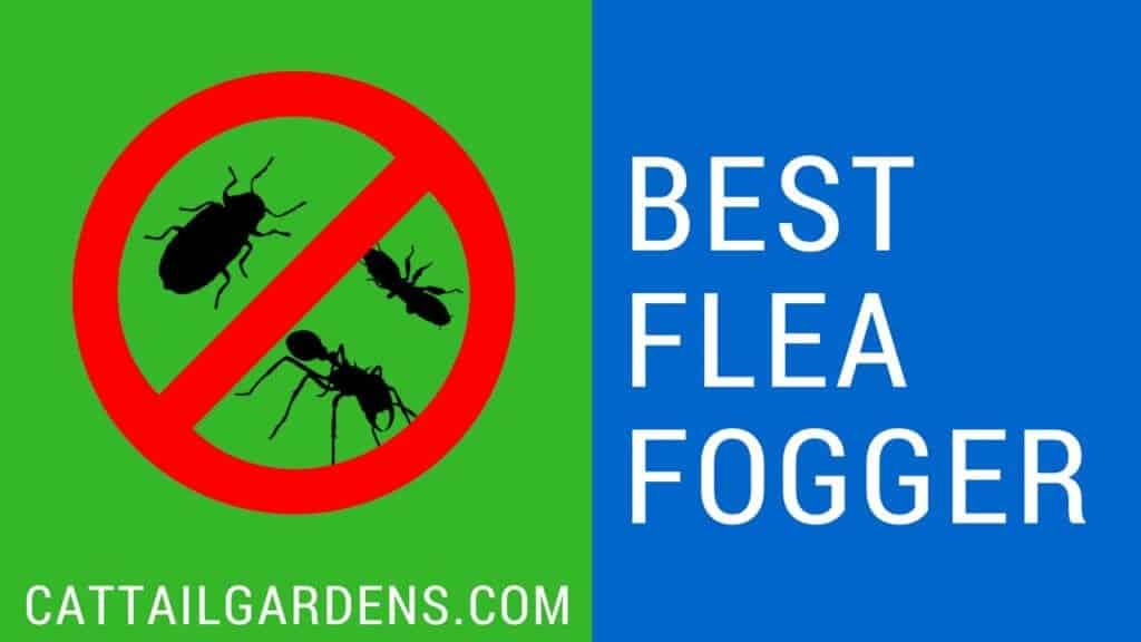 best flea fogger