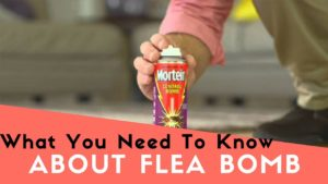 what you need to know about flea bomb