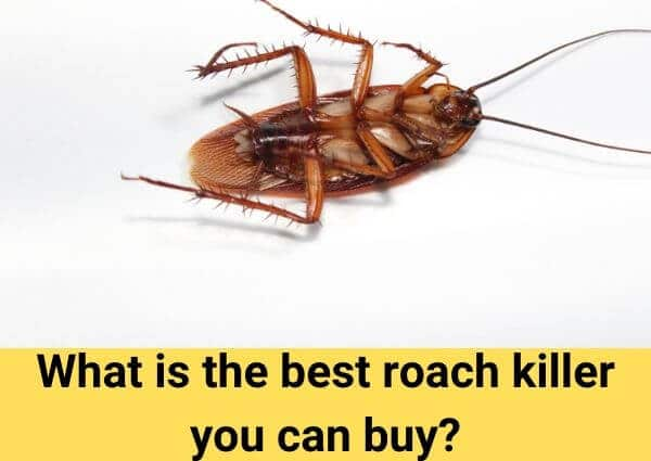 What is the best roach killer you can buy?