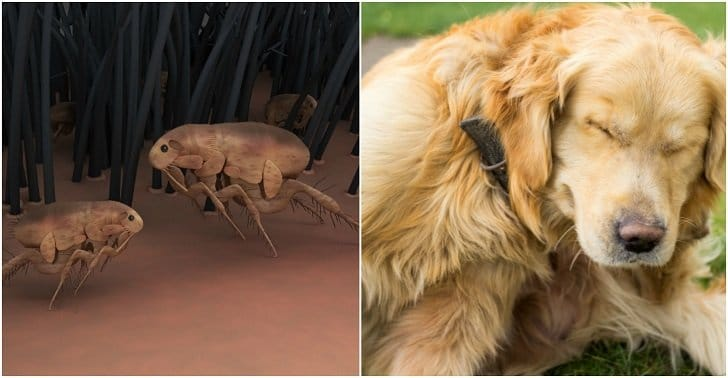 5 Best Ways to Naturally Get Rid of Fleas on Dogs