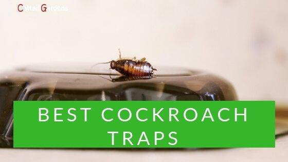 Best Cockroach Traps