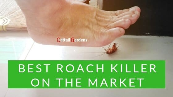 Best Roach Killer on the Market Review