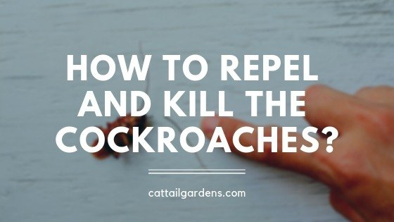 How to repel and kill the cockroaches