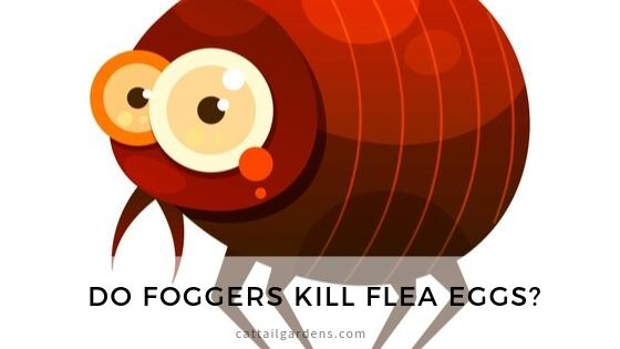 Do foggers kill flea egg