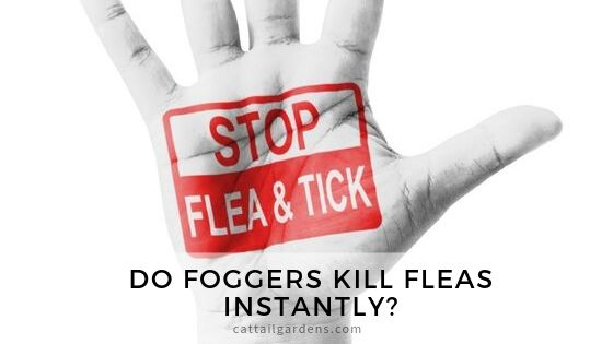 Do foggers kill fleas instantly