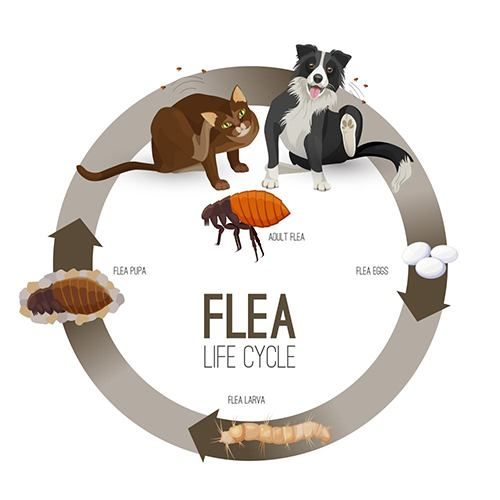 How to choose the best flea spray for dogs, cats