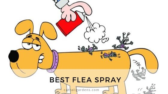 Best flea spray