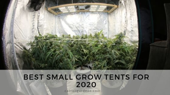 Best small grow tents for 2020
