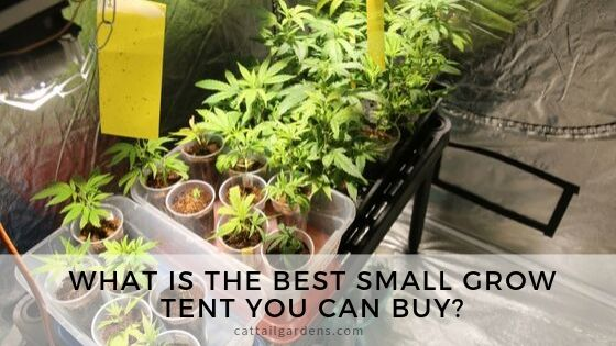 What is the best small grow tent you can buy?