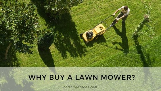 Why buy a lawn mower?