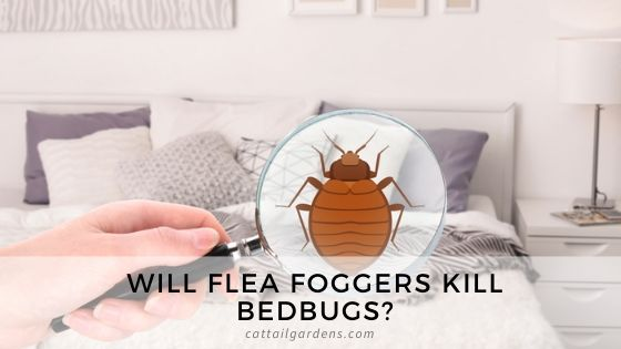 Will flea foggers kill bedbugs?