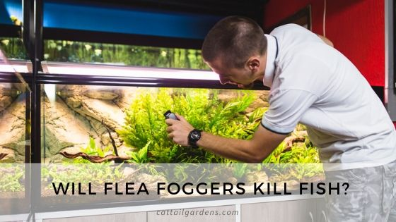Will flea foggers kill fish