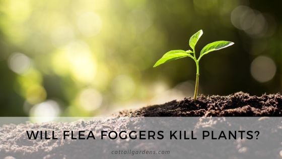 Will flea foggers kill plants?