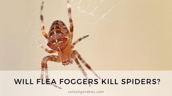 Will flea foggers kill spiders?