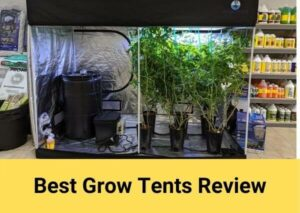 Best Grow Tents Review