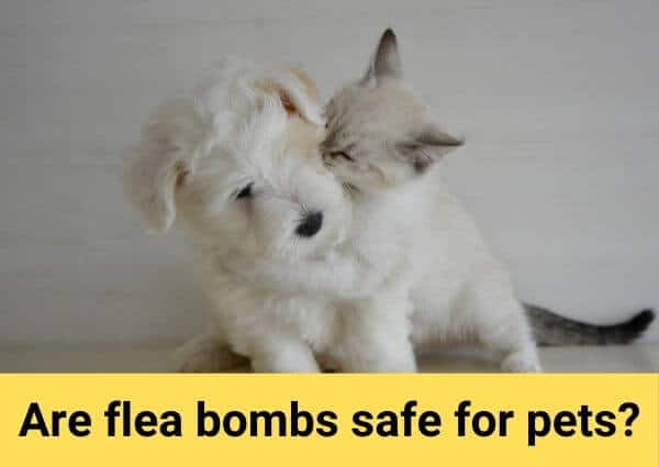 are flea bombs safe for pets