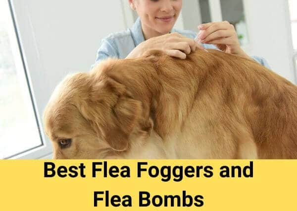 best flea foggers and flea bombs 2020