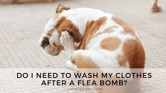 Do I need to wash my clothes after a flea bomb