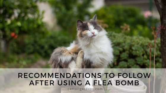 Recommendations to follow after using a flea bomb