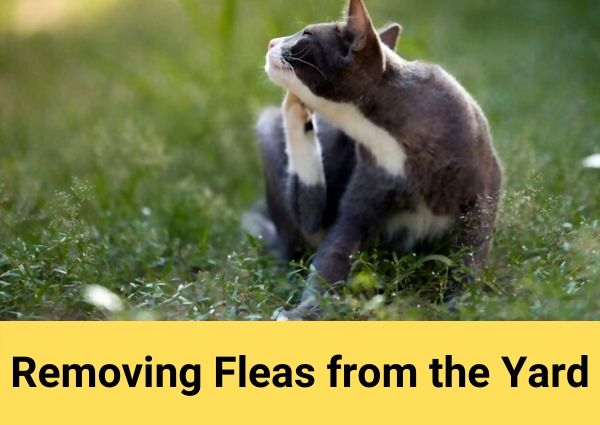 Removing Fleas from the Yard