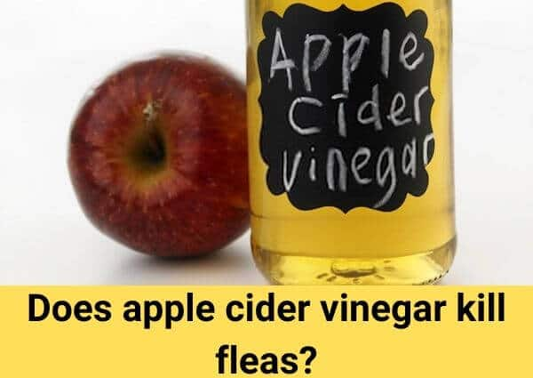 Does apple cider vinegar kill fleas?