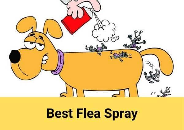 Best flea spray 2021