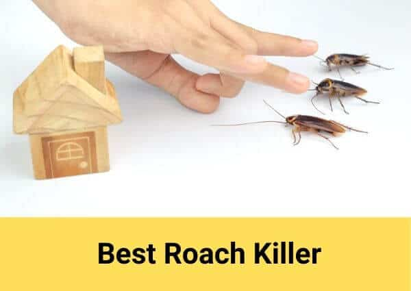 Best Roach Killer Review