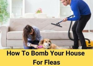 How To Bomb Your House For Fleas