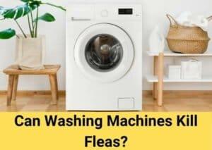 Can Washing Machines Kill Fleas