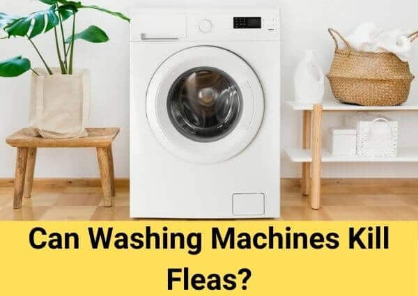 Can Washing Machines Kill Fleas