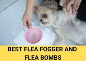 best flea fogger and flea bombs updated 2021