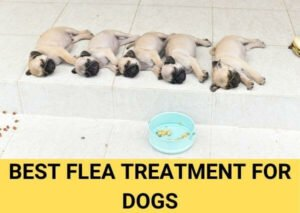 best flea treatment for dogs 2021