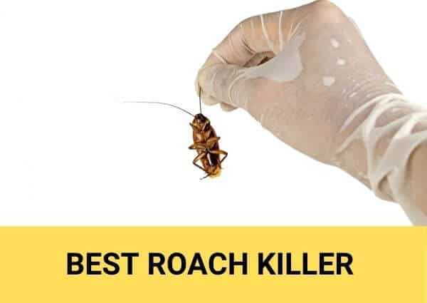 best roach killer review 2021
