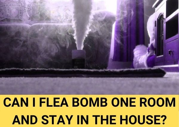 Can I flea bomb one room and stay in the house