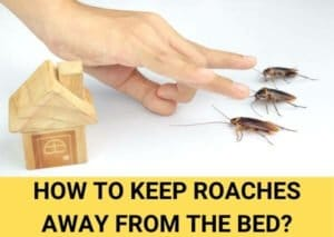 How to keep roaches away from bed