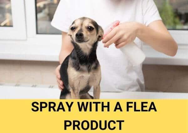 spray with a flea product